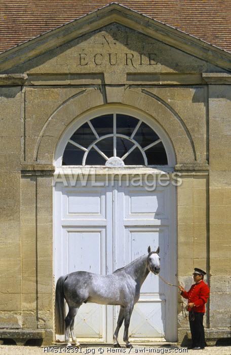 France, Orne, Haras du Pin (stud farm), arab thoroughbred stallion