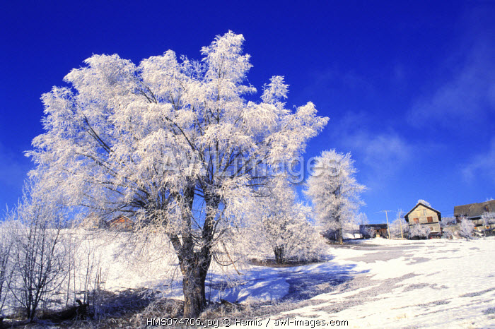 France, Isere, trees in winter