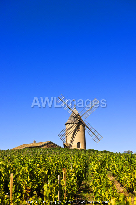 France, Rhone, Beaujolais, Moulin a Vent vines