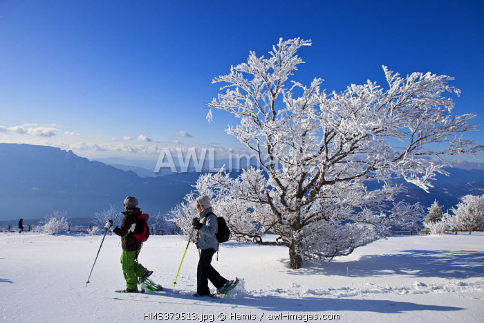France, Savoie, Le Revard, Massif des Bauges Natural regional Park, snowshoe hike from the viewpoint at 1537m with view over Bourget lake and Aix les Bains