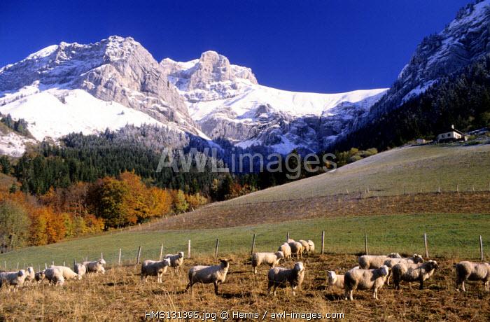 France, Haute Savoie, La Tournette near Annecy town