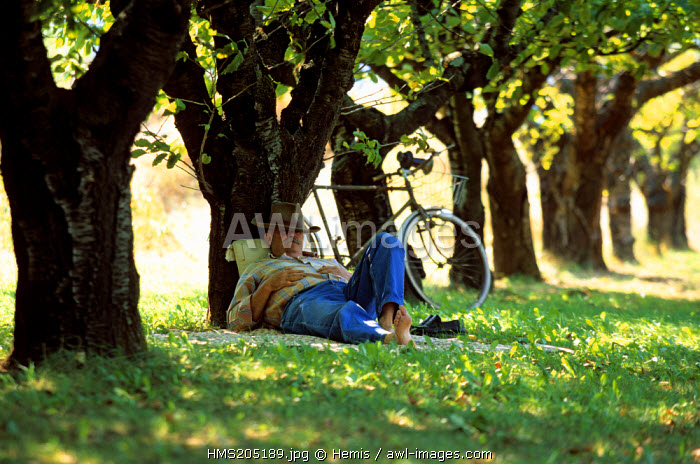France, Drome, Valence, having a nap under cherry trees, release
