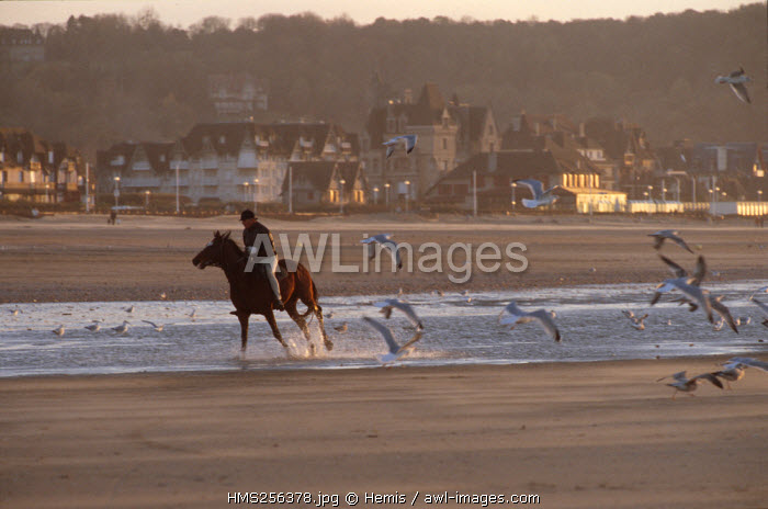 France, Calvados, Deauville, horse and rider on the beach in the evening light