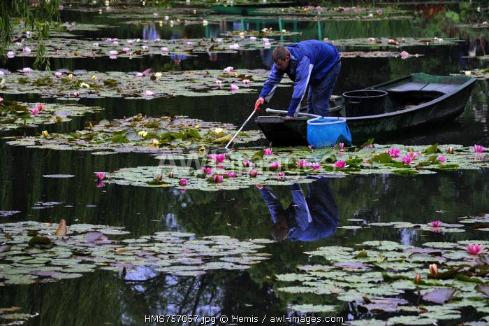 France, Eure, Giverny, Claude Monet garden, le Jardin d'Eau (Water garden)
