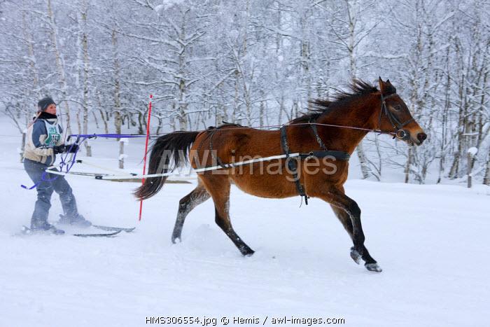 France, Savoie, La Feclaz, Massif des Bauges, Skijoring competition