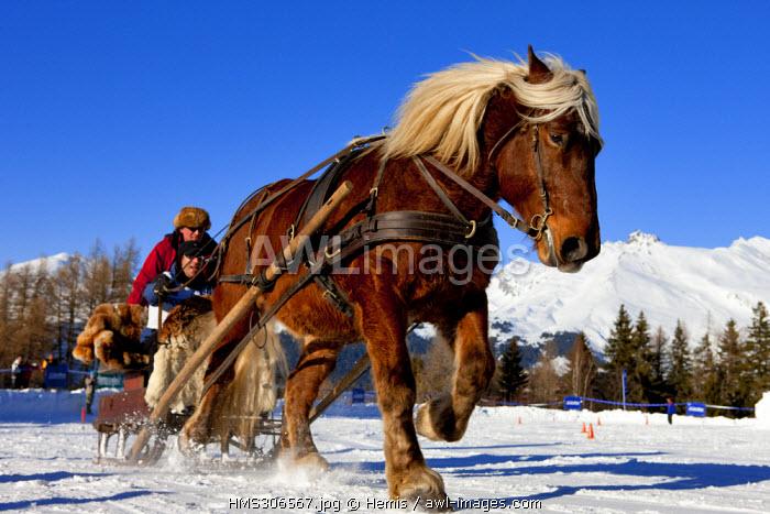 France, Savoie, Les Arcs 1600, Massif de La Vanoise, High Tarentaise Valley, horse sledging race