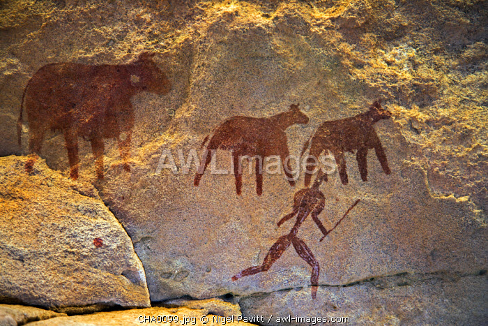 Chad, Taore Koaole, Ennedi, Sahara. A painting of cattle and a man running with a stick or club in hand decorate the sandstone wall of a cave.