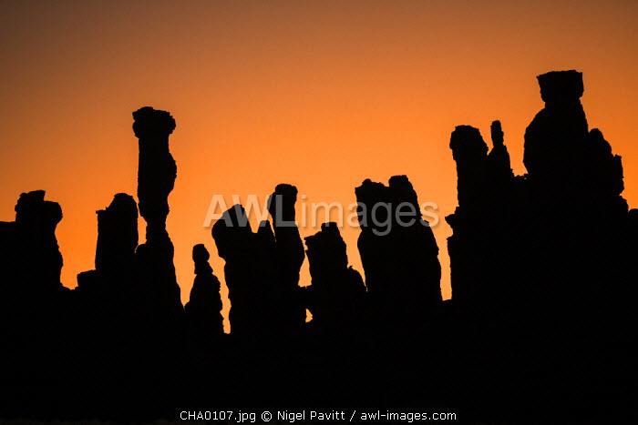 Chad, Abaike, Ennedi, Sahara. A striking cluster of weathered sandstone columns at dawn.