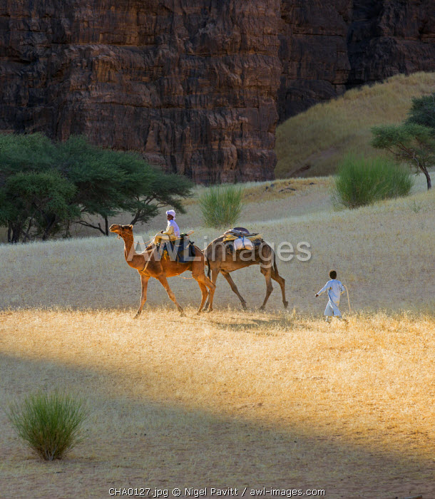 Chad, Bechike, Ennedi, Sahara. Young Toubou boys with a camel on their way Bechike well.