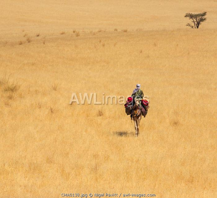 Chad, Deli, Ennedi, Sahara. A lone Toubou Nomad rides his camel through arid plains near Deli