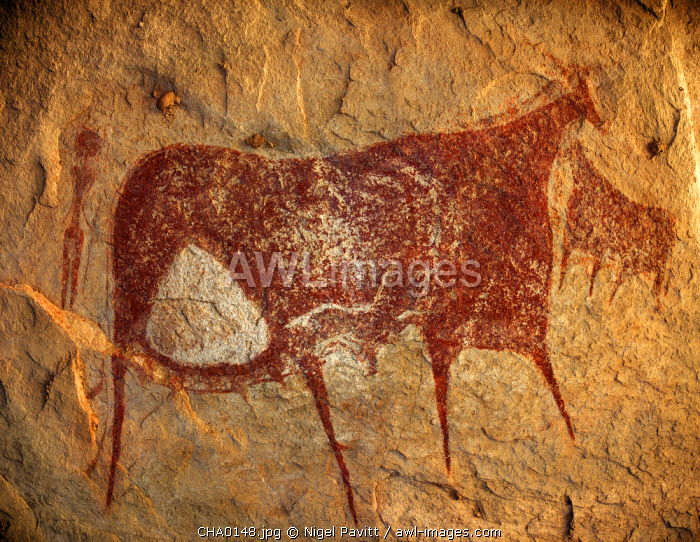 Chad, Terkei East, Ennedi, Sahara. A large bichrome painting of cows and a figure holding a lance on the ceiling of a vast rock shelter.
