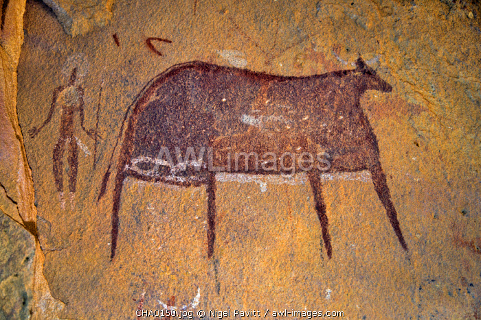 Chad, Terkei East, Ennedi, Sahara. A large bichrome painting of a cow and a figure holding a lance or stick on the wall of a vast rock shelter.