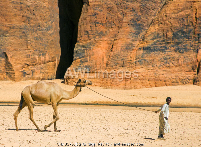 Chad, Wadi Archei, Ennedi, Sahara.  A young boy leads a camel on a rope.