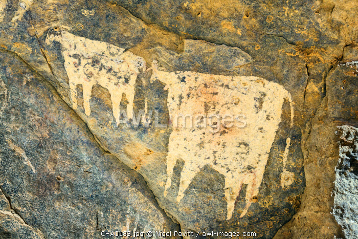 Chad, Wadi Archei, Ennedi, Sahara.  An ancient painting of two white bulls on the wall of a cave.