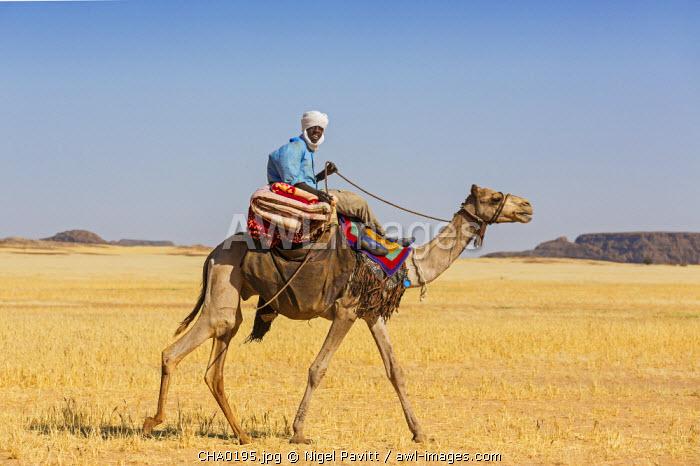 Chad, Terkei, Ennedi, Sahara.  A Toubou nomad rides across the arid plains near Terkei.