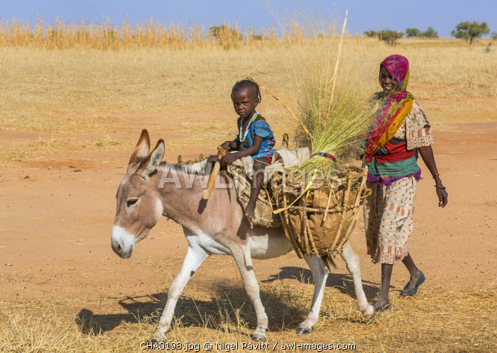 Chad, Arada, Biltine, Sahel.  A small girl rides home on a donkey followed by her mother on foot.
