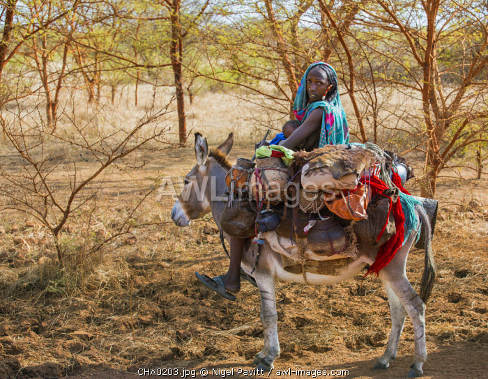 Chad, Mongo, Guera, Sahel.  A Chadian Arab Nomad woman and her child move with their possessions on a donkey near Mongo.
