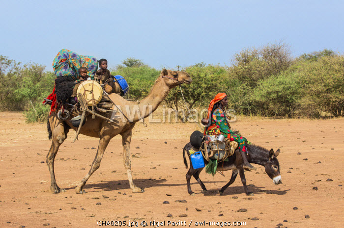 Chad, Mongo, Guera, Sahel.  A Chadian Arab Nomad woman and her young children move with their possessions to new pasture.