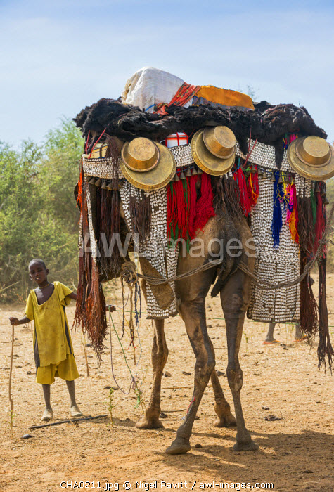 Chad, Mongo, Guera, Sahel.  A young boy of the Chadian Arab Nomad tribe holds a magnificently caparisoned camel.