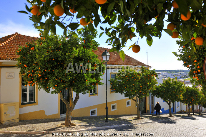 Orange trees in the streets of the historical village of Avis, Alentejo. Portugal