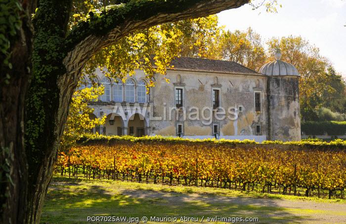 Vineyards of the Quinta da Bacalhoa estate, that dates back to the XV century. Azeitao, Portugal