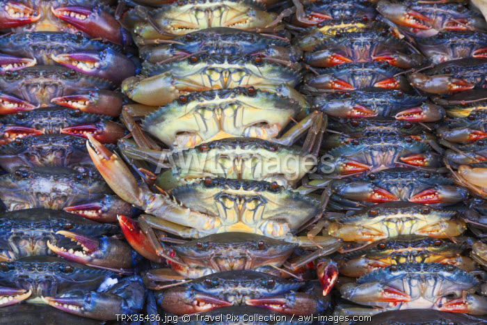 Vietnam, Ho Chi Minh City, Ben Thanh Market, Seafood Stall, Crabs