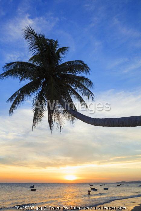 Vietnam, Mui Ne, Mui Ne Beach, Palm Trees at Sunset