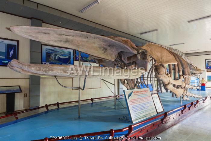 Vietnam, Nha Trang, National Oceanographic Museum, Hump-Backed Whale Skeleton