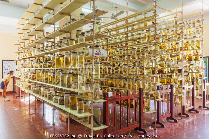 Vietnam, Nha Trang, National Oceanographic Museum, Speciman Room, Jars of Preserved Marine Life