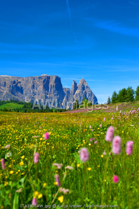 Schlern Mountain, Seiser Alm, Trentino, South Tyrol, Italy