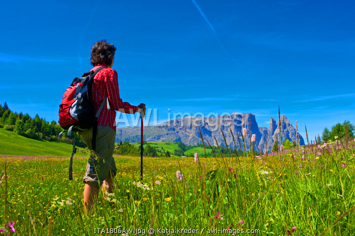 Hiking, Schlern, Seiser Alm, Trentino, South Tyrol, Italy MR