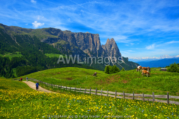 Seiser Alm, Trentino, South Tyrol, Italy