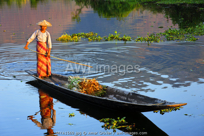 Myanmar, Burma, Shan State, Inle Lake. An Intha villager punts her small boat in a waterway at Maing Thauk village by Inle Lake, a region inhabited mainly by the Intha ethnic group.
