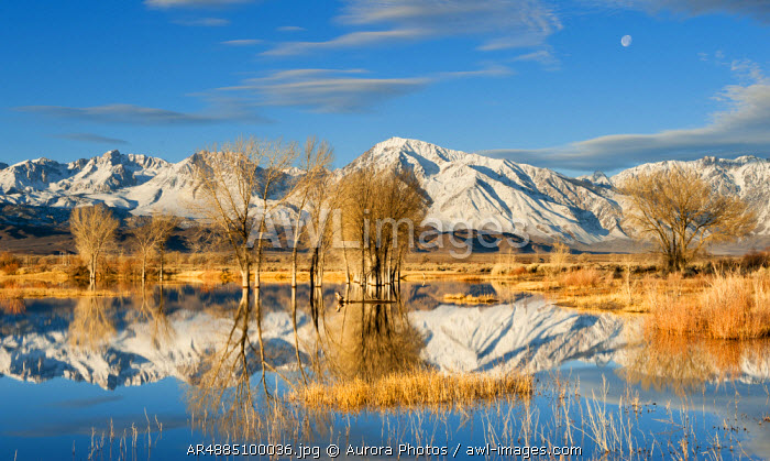 awl-images.com - USA / Early morning winter light and setting moon over an Eastern Sierra Pond, Owens Valley, Bishop, California, USA