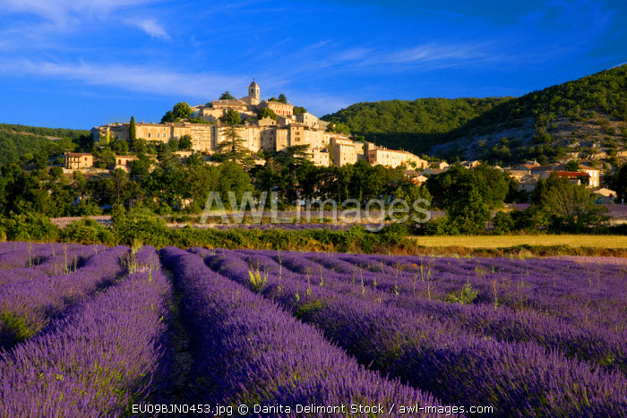Sunrise over lavender field and the village of Banon in the Vaucluse, Provence, France.