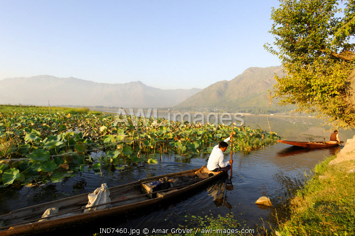 India, Jammu & Kashmir, Srinagar, Dal Lake. Backed by the Zabarwan Hills, locals often use small pleasure boats on Dal Lake and its channels and waterways leading to hamelts and suburbs of Srinagar.