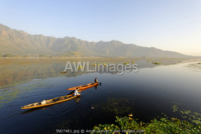 India, Jammu & Kashmir, Srinagar, Dal Lake. Locals take small pleasure boats on the placcid waters of Dal Lake which is backed by the Zabarwan Hills.
