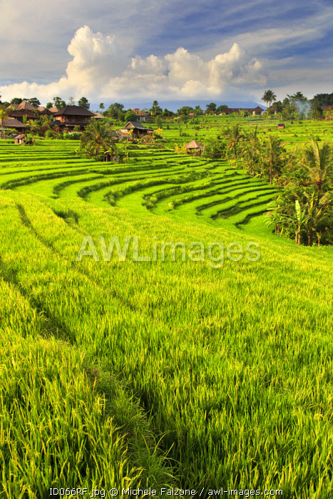 awl-images.com - Indonesia / Indonesia, Bali, Sidemen Valley, Rice Fields