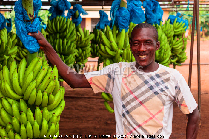 Africa, Cameroon, Tiko. Portrait of man working at banana factory.
