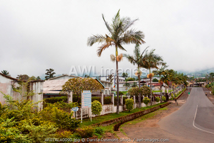 Africa, Cameroon, Limbe. View of palm trees along street.