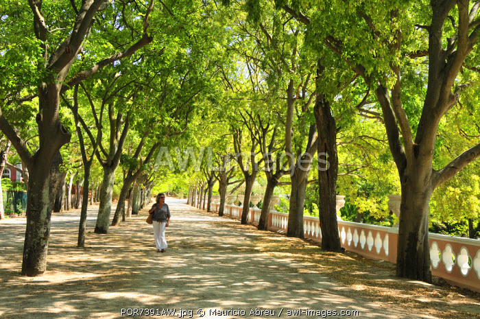 A tranquil walk at the Necessidades gardens, belonging to the Necessidades Palace, 18th century. Lisbon, Portugal (MR)