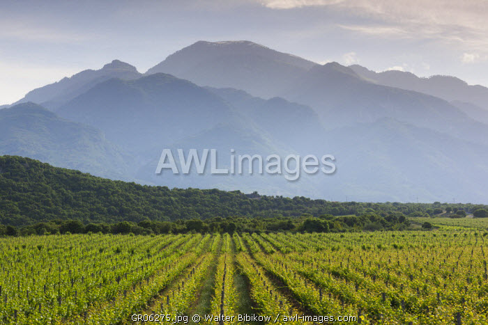Greece, Central Macedonia Region, Dion, vineyard in the shadow of Mount Olympus