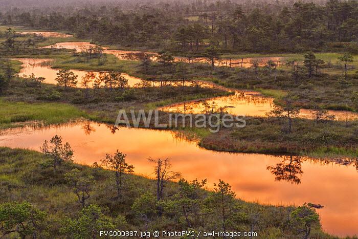 Estonia, Jogeva County, Endla bog is a nature reserve in central estonia