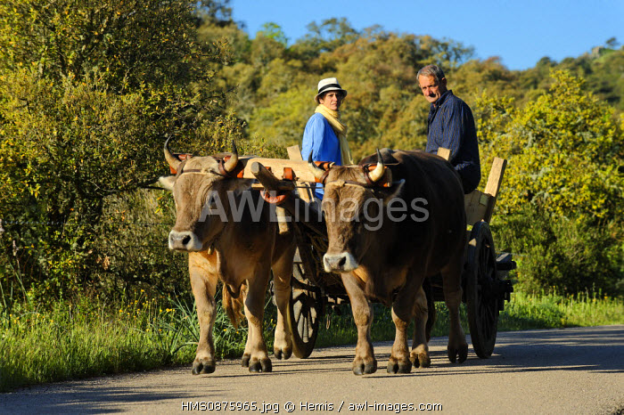 Italy, Sardinia, Olbia Tempio Province, Aggius, horse wagon pulled by a couple of beef roadside