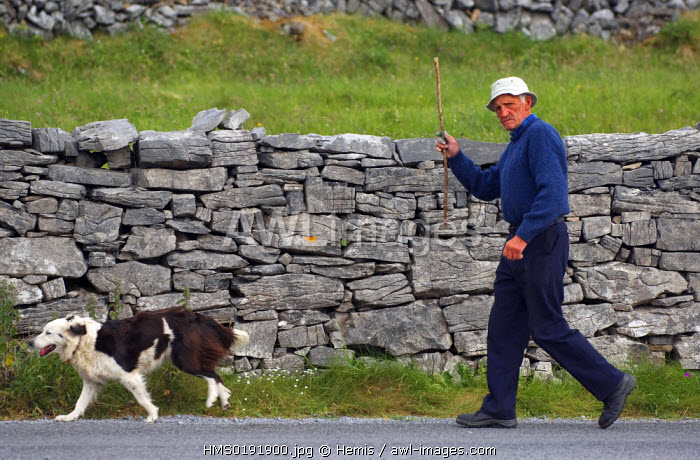 awl-images.com - Ireland / Republic of Ireland, County Galway, Aran Islands, Inishmore, man and his dog