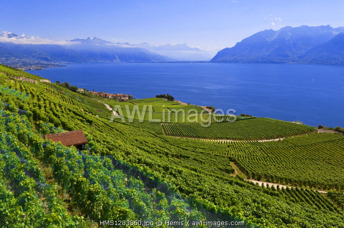 Switzerland, Canton of Vaud, Lavaux Vineyard Terraces listed as World Heritage by UNESCO, hills around the village of Chexbres