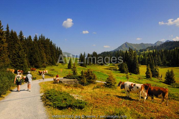 Switzerland, Canton of Vaud, Villars sur Ollon, hamlet of Bretaye, hikers