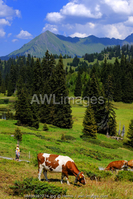 Switzerland, Canton of Vaud, Villars sur Ollon, hikers