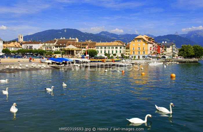 Switzerland, canton of Vaud, Vevey, Lake Geneva, lake and swans