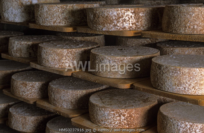 Switzerland, Grisons region, Graubuenden canton, Maloja, Bregaglia cheese